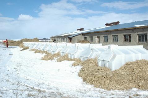 пластиковые домики для телят, телячий домик, домик для телят Пласто